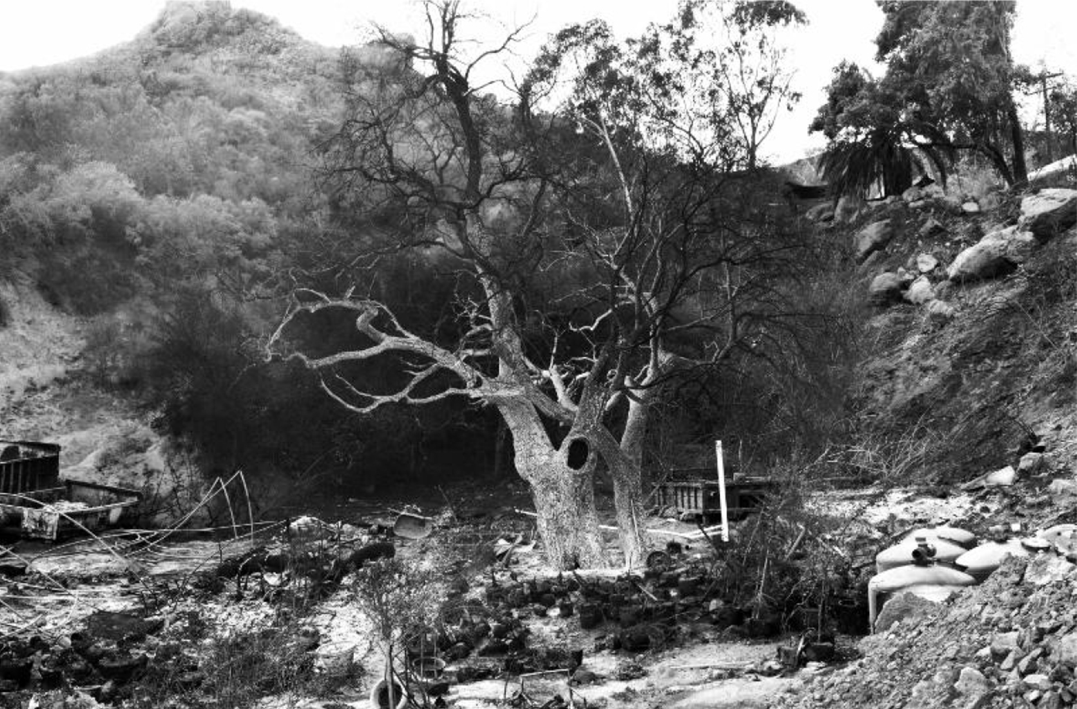 black and white photograph of a burned landscape with a charred tree at the center of the frame